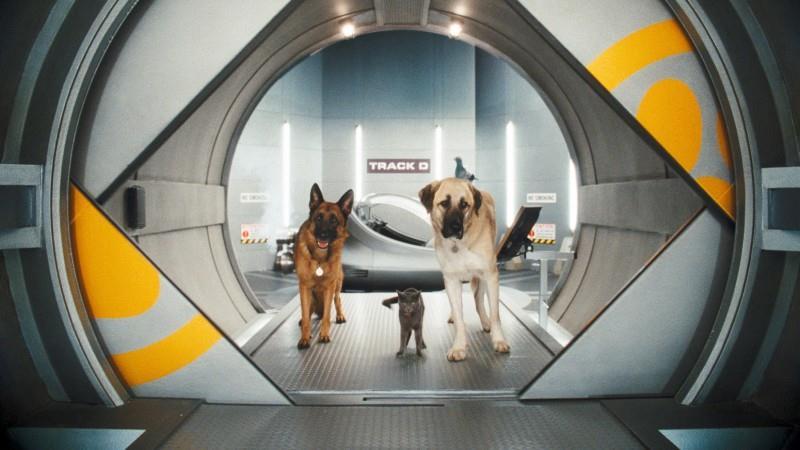 смотреть   онлайн фильм кошки против собак 2