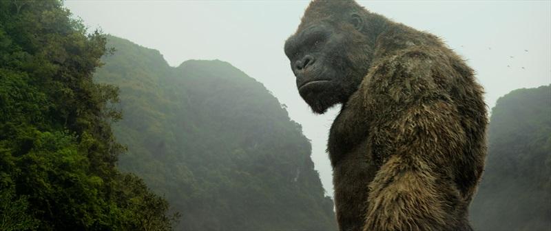 Kongs: Galvaskausa sala