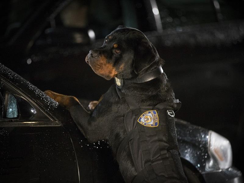 Suņu neiespējamā misija