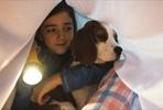 EventGalleryImage_DogsJourney (10).jpg