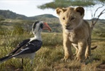 EventGalleryImage_TheLionKing (1).jpg