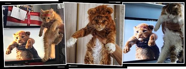Karalis Lauva - konkursa uzvarētāji